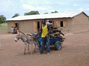 Guanware donkey cart
